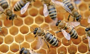Méhészek, figyelem!