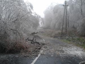 Életveszélyesek az erdők a Pilisben és a Budai-hegységben!