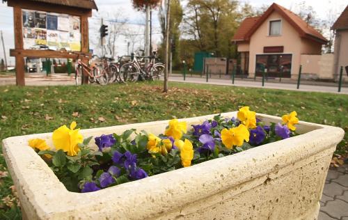 Ősszel is virágpompába öltözik a város