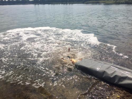 Újabb halállomány költözött az Omszk-tóba