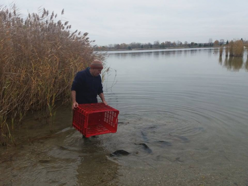 Ősszel is telepítik a halakat az Omszk-tóba