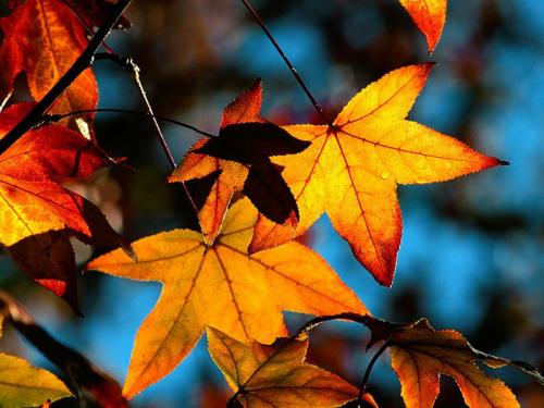 Hivatalosan is beköszönt a csillagászati ősz