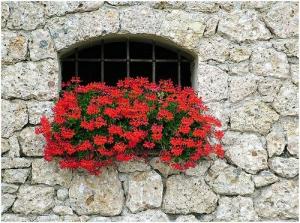 Virágba borulnak a terek
