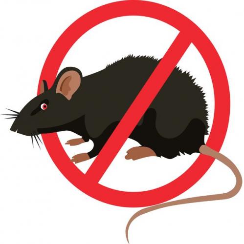 Holnaptól patkányirtást végeznek a Barát-patak környékén